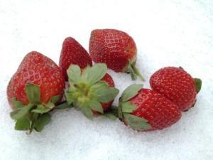 Erdbeere_draußen_klein