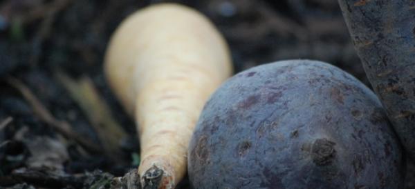 Solidarische Landwirtschaft  - sich die Ernte teilen
